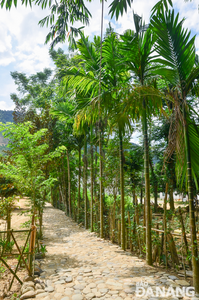 An entrance road to the Dinh Nhu homestay